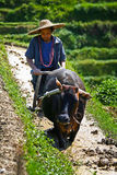 An Chinese farmers works hard on rice field Stock Photos