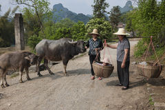 Chinese farmwomen with buffalos and baskets Stock Images