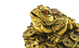 Chinese Feng Shui lucky money frog for good luck Royalty Free Stock Images