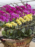 Chinese  festival  flowers Stock Photography