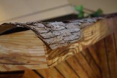 Chinese fir bark Stock Photography