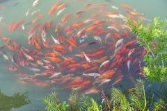 Chinese fish Stock Photo