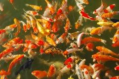 Chinese fish Royalty Free Stock Photo