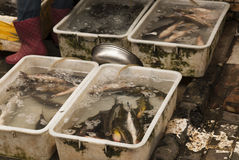 Chinese fishmarket. Alie fish in plastic tanks on a Shanghai street Royalty Free Stock Photos