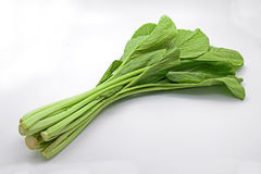 Chinese Flowering Cabbage on White Background stock photography