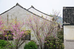 Chinese folk houses. With blooming trees in front in a southern Chinese traditional village Royalty Free Stock Image