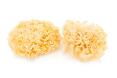 Chinese food tremella fuciformis white fungus isolated Royalty Free Stock Images