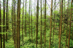 Chinese forest Stock Images