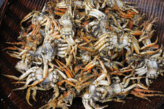Chinese fried crab Royalty Free Stock Photo