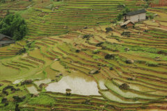 Chinese Fubao terrace (14). Continuous green farm terrace in Sichuan province of China Royalty Free Stock Photography