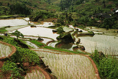 Chinese Fubao terrace (3). Quiet farmland with amazing terraces Stock Photos