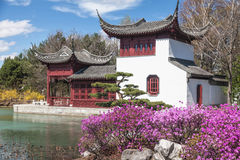Free Chinese Garden Royalty Free Stock Images - 31569349