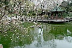 Chinese garden Stock Photos
