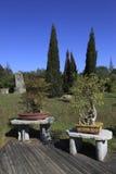 Chinese garden bonsai Stock Images