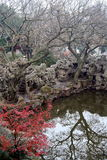 Chinese garden and pond royalty free stock photography