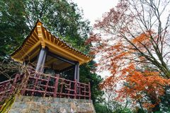 Chinese gazebo with trees and Maple trees in background in Alishan National Forest Recreation Area in Chiayi County, Alishan. Chinese gazebo with trees and stock photo