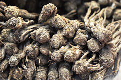 Chinese ginseng Royalty Free Stock Photography