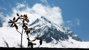 Chinese glacier Stock Images