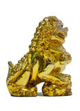Chinese Golden Lion Royalty Free Stock Images