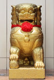 Chinese Golden lion statue with red ribbon Royalty Free Stock Photo