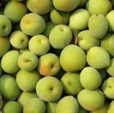 Chinese Green Plums Royalty Free Stock Images