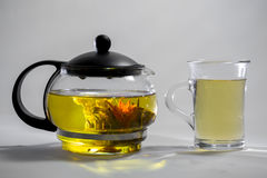 Chinese green tea Bud blooms in a glass teapot. Cup of tea on white background Royalty Free Stock Images
