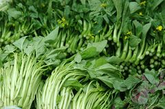 Chinese groene groente Stock Afbeeldingen