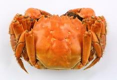 Chinese hairy crab Stock Photos