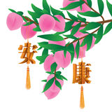 Chinese healthy knot peach fruit tree Royalty Free Stock Images