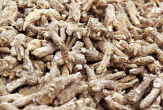 Chinese Herbal medicine - American Ginseng roots Royalty Free Stock Images