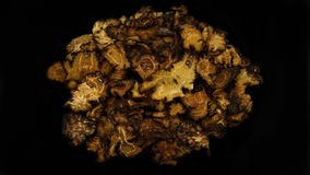 Chinese Herbal medicine chuancong. Chinese Herbal medicine on black background Royalty Free Stock Photography