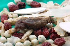 Chinese Herbs Royalty Free Stock Photography