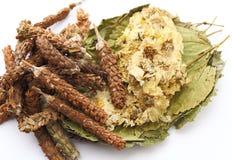 Chinese herbs tea ingredient Stock Photo