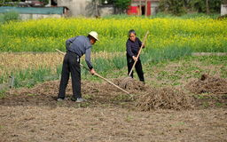 Pengzhou, China: Farmers Working in Field Royalty Free Stock Photo