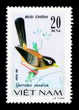 Chinese Hwamei (Garrulax-canorus), Zangvogels serie, circa 1978 stock afbeelding