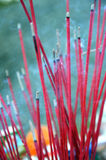 Chinese incense Royalty Free Stock Photography