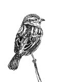 Chinese ink painting bird Royalty Free Stock Images