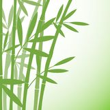 Chinese or japanese bamboo grass oriental wallpaper stock vector. Illustration. Tropical asian plant background Stock Photography