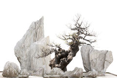 Chinese - Japanese bonsi tree and stones Stock Photo