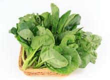 Free Chinese Kale Royalty Free Stock Image - 86164816