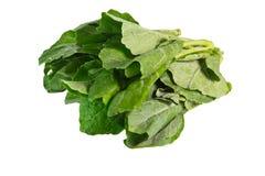 Chinese Kale Stock Image