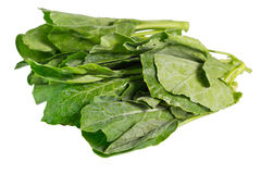 Chinese Kale Stock Photography