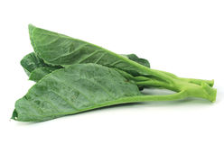Chinese kale vegetable Royalty Free Stock Photography