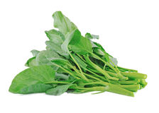 Chinese kale vegetable Stock Image