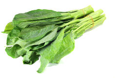 Chinese kale Royalty Free Stock Photography
