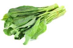 Chinese kale. On white background Royalty Free Stock Photography