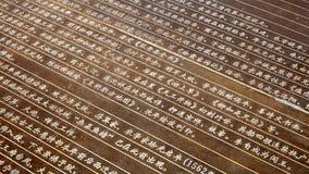 Chinese karakters op het metaal Royalty-vrije Stock Foto
