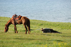 Chinese Kazakh herdsmen  with horse Royalty Free Stock Photo