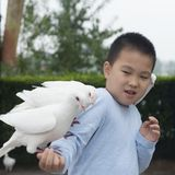 Chinese kid feed pigeon with cautious pose royalty free stock photo