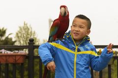 Kid and parrot Royalty Free Stock Image